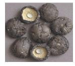 Shiitake Mushroom Without Stem
