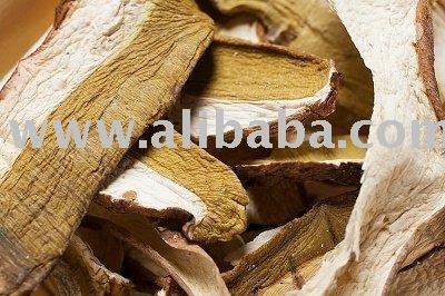 Mushrooms (Boletus Luteus)
