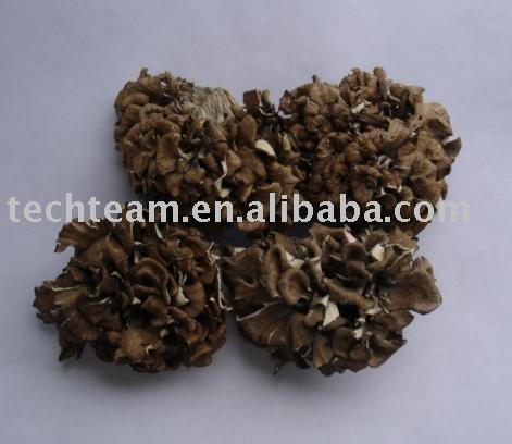 Organic Maitake Mushroom (Grifola frondosa)