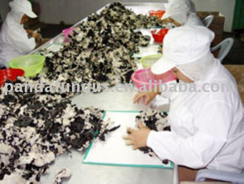 mushrom processing