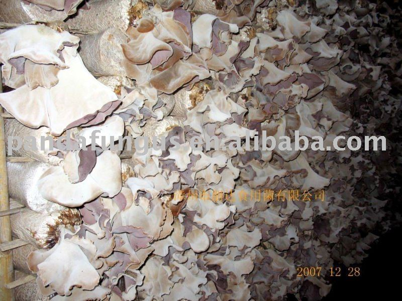 white back black fungus