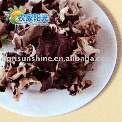 black fungus (white back)