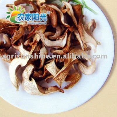 Abalone Oyster Mushroom