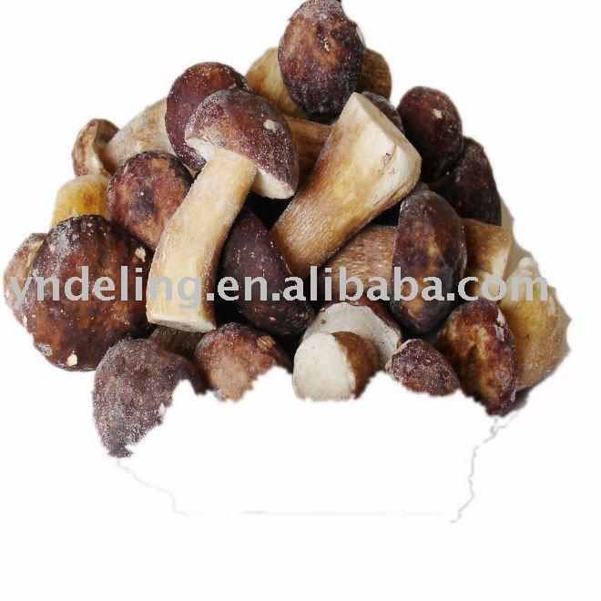 best mushrooms(mushroom)
