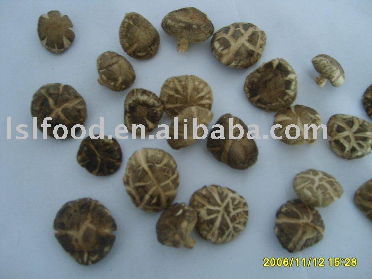 money mushroom