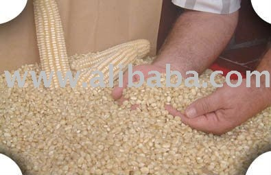 white corn animal feed grade and food grade