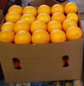 FRESH NAVAL AND VALENCIA ORANGES and mandarin orange,CAVENDISH BANANA,Apples, Oranges, lemon, Mango,
