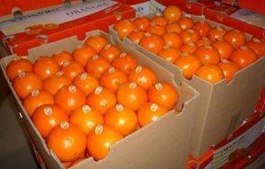 NAVAL AND VALENCIA ORANGES and mandarin ,CAVENDISH BANANA,Apples, Oranges, lemon, Mango, ,,Melons, G