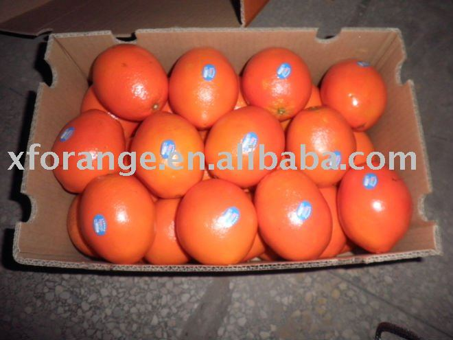 sweet Gannan navel orange