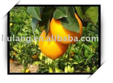 Fresh Gannan Navel orange