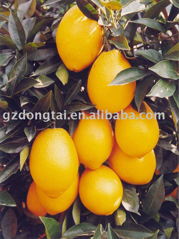 Gannan red navel orange