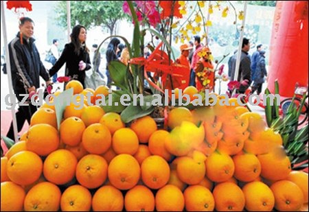 Gannan export navel orange