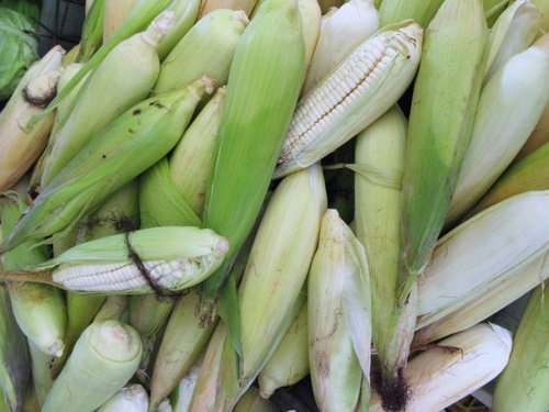 Pure and Mixed White and Yellow Corn
