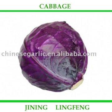 cabbage(purple)