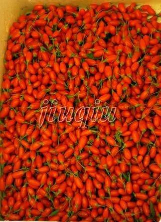 china lycium bararum fruits