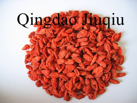 dry wolfberry fruits/goji berry fruits