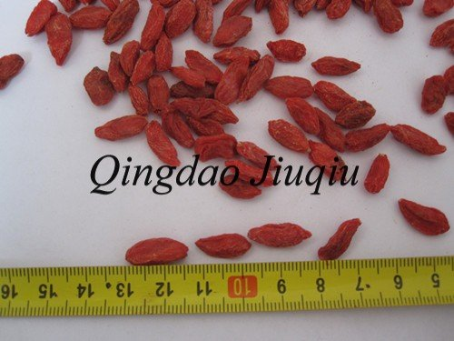 dry chinese wolfberry fruit