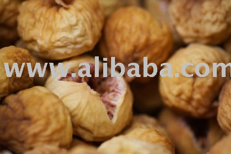 Persian Fig