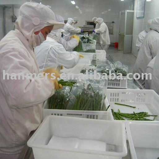 IQF green asparagus tips and cuts products,China IQF green asparagus ...
