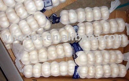 New Crop Fresh white garlic