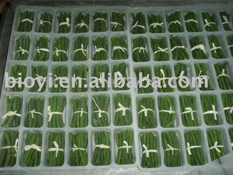 New crops frozen green beans cut
