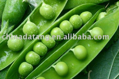 продам китайский IQF зеленый горошек