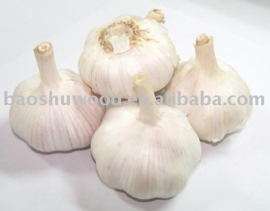 Pizhou  Great   white  garlic