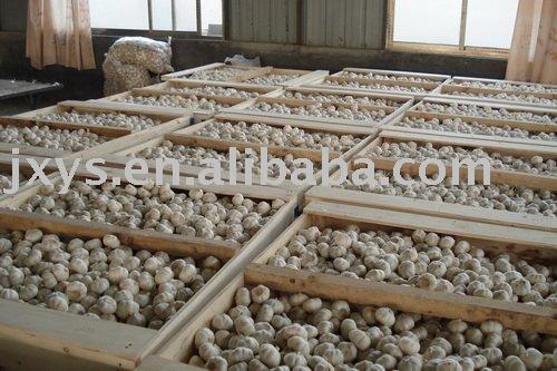 2010 Chinese white garlic-wooden case