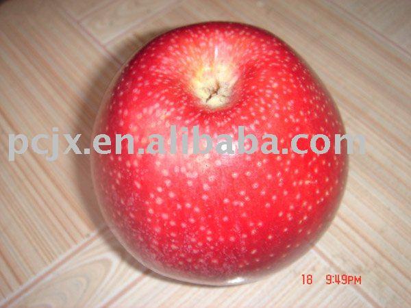 Red  Qin   Guan   apple