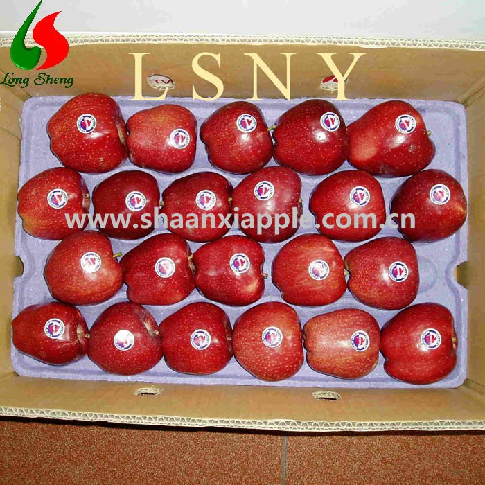 sales export to UAE red huaniu apple