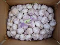 QUALITY WHITE GARLICS FOR SALE AT GOOD PRICES