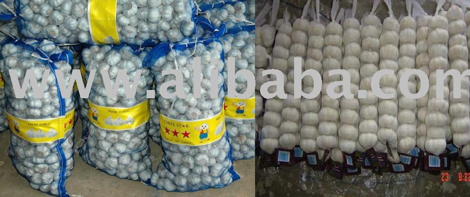 Fresh Garlic :contact now for your surply