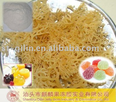 Jelly Products Raw Material--Carrageenan