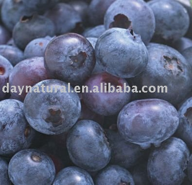 Blueberry Extract./Bilberry Extract.