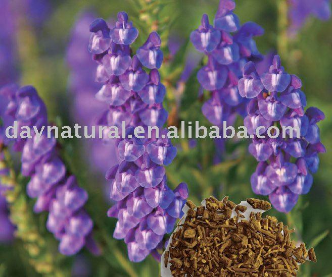 Radix Scutellariae P.E. /Baical Skullcap Root P.E -- HPLC 80%-98%