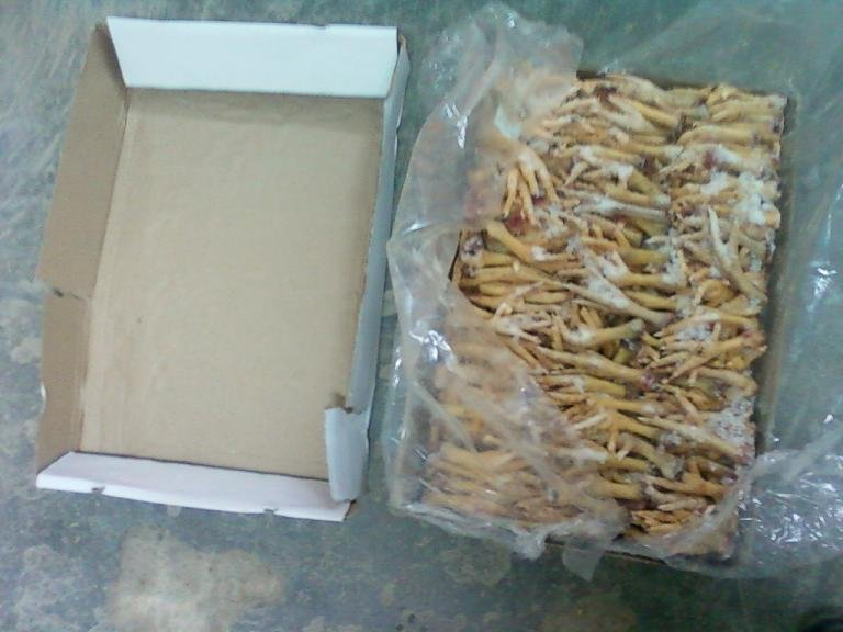 chicken feet supplier