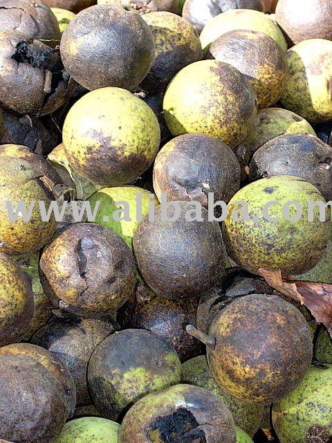 Where can you buy black walnuts