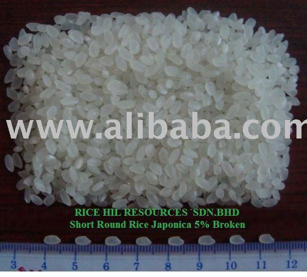 Short Round Rice Japonica 5% Broken