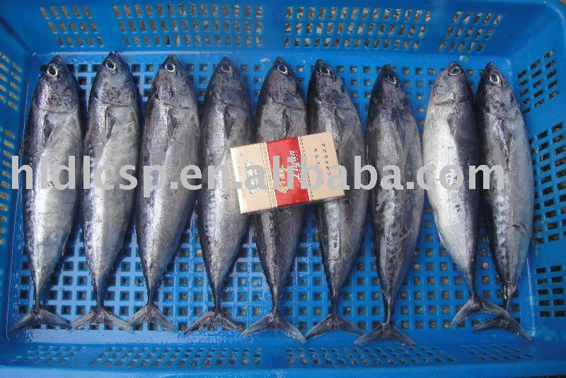 Frozen Bonito W/R or Cooked Loin