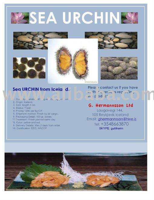 Sea Urchin roe fresh by air cargo.