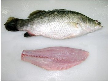how to cook a fillet of barramundi