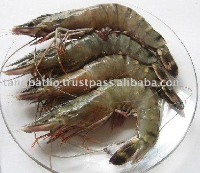 Live Black Tiger Shrimp Products Vietnam Live Black Tiger Shrimp Supplier