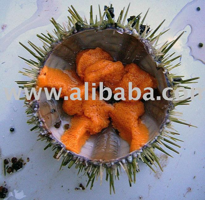 sea urchins roe