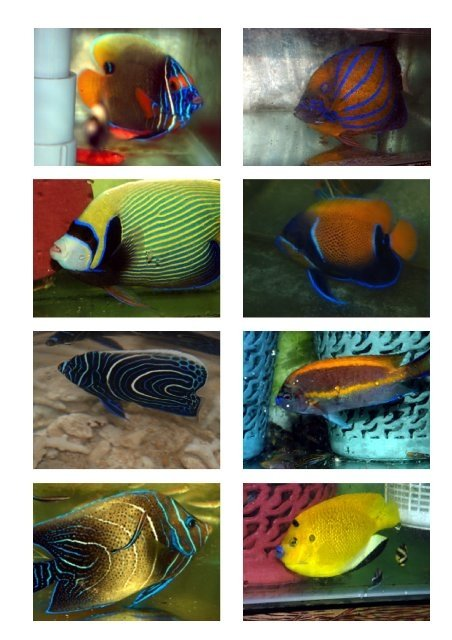 Buy live tropical fish online canada for Buy fish online