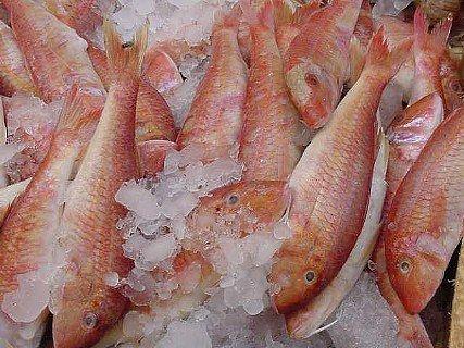 Red Mullet / Goatfish