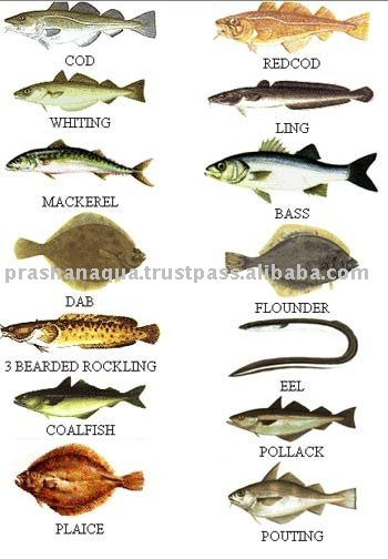 sea fish product name dark sea fish product origin tamil nadu india    Indian Sea Fish