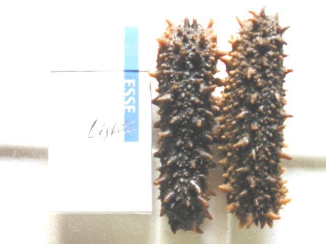 Frozen Seacucumber