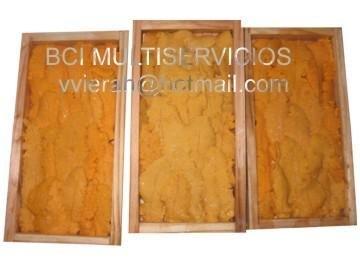 Fresh sea urchin wooden case 13mm