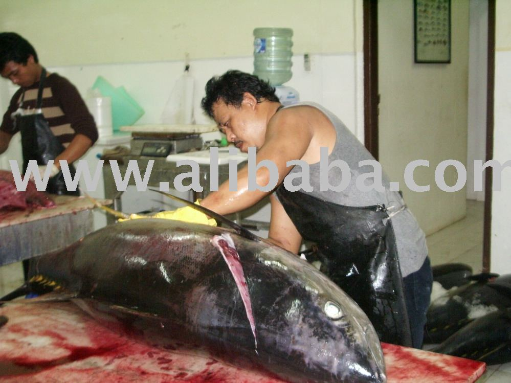 Fresh Aceh Tuna