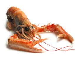 how to prepare frozen langoustines